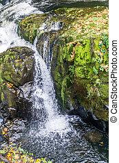 Tumwater Falls Park Sideways