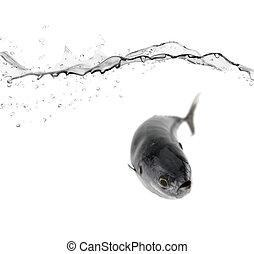 tuna魚吊錨器, 在水中