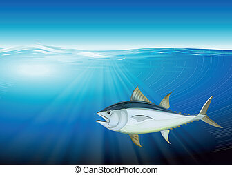 Tuna - Illustration of the tuna