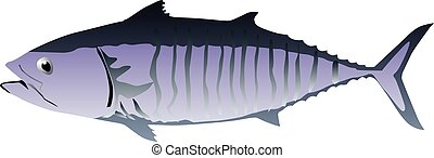 Tuna fish isolated vector