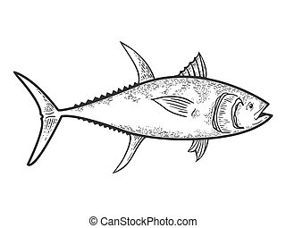 Tuna fish sketch engraving vector illustration. T-shirt apparel print design. Scratch board style imitation. Black and white hand drawn image.