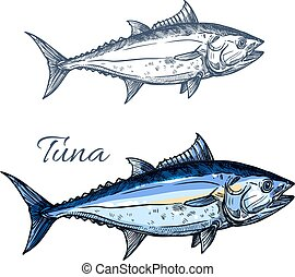 Tuna fish sketch with atlantic bluefin tunny