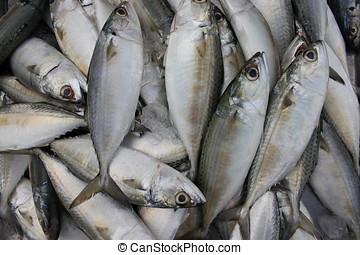 tuna halfajták