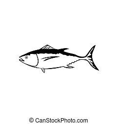 Tuna - Vector illustration : Tuna on a white background.