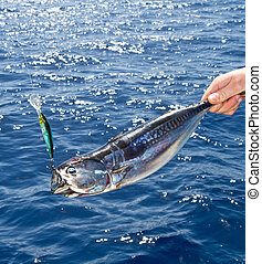 tuna Mediterranean big game fishing