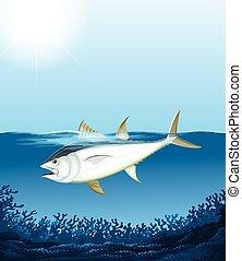 Tuna swimming in the sea