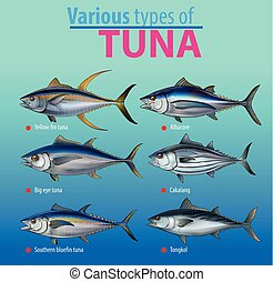Tuna - Vector illustration, various type of tuna fish