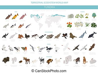 Tundra biome. Isometric 3d style. Terrestrial ecosystem world map. Arctic animals, birds, fish and plants infographic design