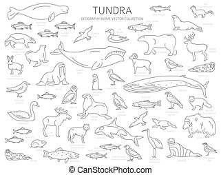 Tundra biome. Simple line style. Terrestrial ecosystem world...