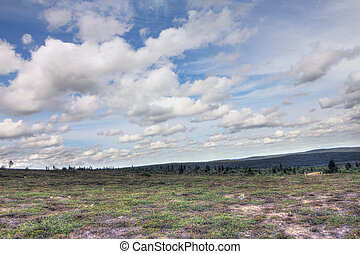 Beautiful summer tundra landscape in Lapland, Finland