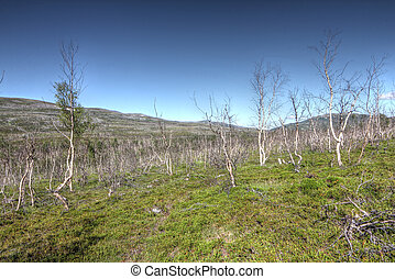 Tundra Landscape with trees and hills in northern Norway