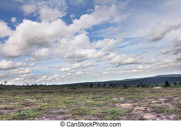 tundra, landskap
