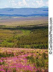 Tundra on Alaska - tundra in Alaska
