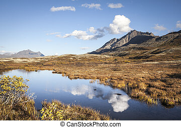 Tundra pond reflections in fall