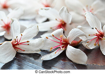 Tung tree flowers on the wooden table