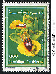 TUNISIA - CIRCA 1990: stamp printed by Tunisia, shows Yellow Ophrys, circa 1990
