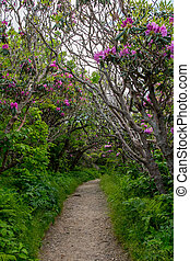 tunnel, buissons, rhododendron
