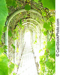 tunnel, de, vigne