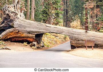 tunnel, hak hout in, het nationale park van de sequoia