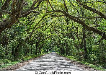 Tunnel of Oak Trees in South Carolina