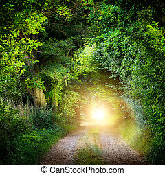 Fantasy landscape with a green tunnel of illuminated trees on a forest path leading to a mysterious light. Brightly lit outdoor night shot.