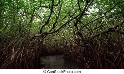 Tunnel through the Mangroves in Sri Lanka - Passenger...