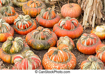 "Turban squash, also known as ""Turk's turban"" or ""French turban"" (""Giraumon"" in French), is a type of squash most often used as a winter squash."