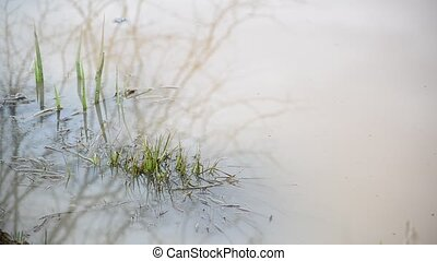 Turbid water in the pond and  grass