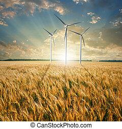turbines, blé, vent, générateurs, champ