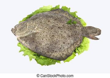 Turbot ( fish )