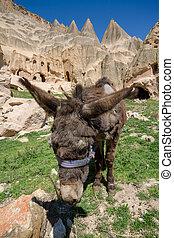 turecko, osel, ubytovat se, jeskyně, bojiště, goreme, cappadocia