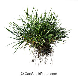 Turf grass and earth - White isolated turf grass and earth. ...