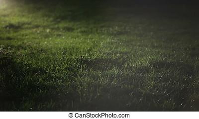 Turf Grass at Night Pan - Grass at night. Artificial light....