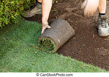 Turf is laid by gardener - Gardeners lay a turf in a garden