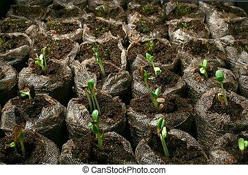 turf, pots., seedlings