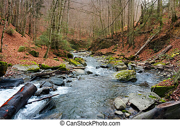 Turichka river in the forest near Lumshory village of...