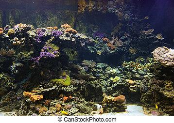 turist see marine life - underwater tunnel to see marine...