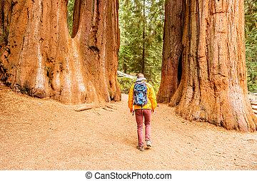 turista, com, mochila, hiking, em, parque nacional sequóia
