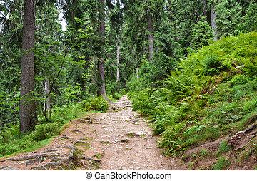 turista, percorso, in, profondo, foresta verde
