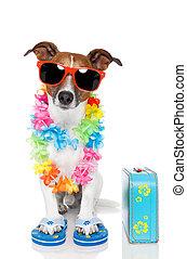turista, perro, con, hawaiano, lei, y, un, bolsa