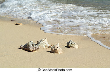 Turk and caicos Islands - Conch shells on beach at grand ...