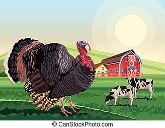 turkey and cows in the landscape scene