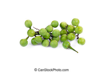 turkey berry isolated in white background