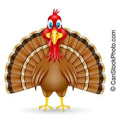 turkey bird vector illustration