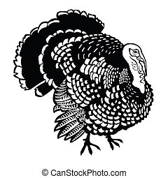 turkey black white