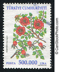 briar - TURKEY - CIRCA 2001: stamp printed by Turkey, shows...