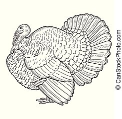 Turkey contour isolated on the white background