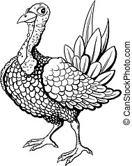 Turkey - Funny turkey in black and white flowers isolated on...