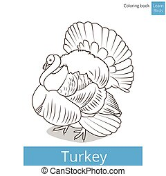 Turkey learn birds coloring book vector - Turkey learn birds...