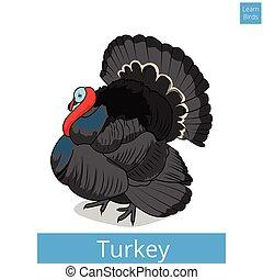 Turkey learn birds educational game vector